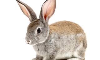 Piada do Dia: O Coelhinho Que Fugiu do Laboratório...