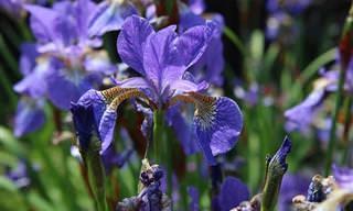 Plantas perenes com flores coloridas e fácil manutenção