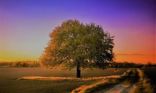 Teste de Personalidade: Qual Árvore Representa a Sua Personalidade?