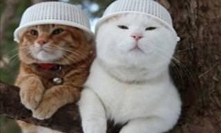 Fofas e Hilárias Fotos de Gatos Atrapalhados!
