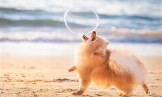 As Melhores Fotos de Cães de 2018