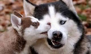 Pais do Reino Animal Irritados Com Seus Filhotes