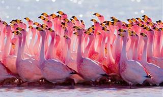 20 Fotos Incríveis De Lindos Flamingos