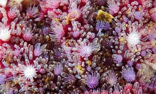 A Beleza das Estrelas do Mar Em Macrofotografias