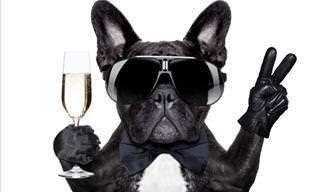 Piada: O cão mais esperto ou imbecil de todos os tempos?