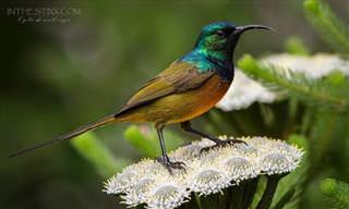Os Pássaros Silvestres Mais Lindos do Mundo