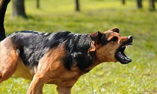 O Que Fazer Quando um Cão Está Prestes a te Atacar?
