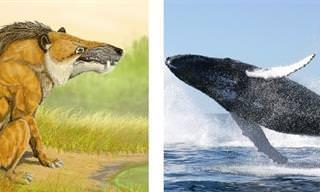 Veja Como Estes 15 Animais Mudaram com o Tempo