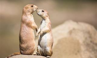 Como os Animais se Comunicam