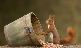 27 Fotos de Esquilos Adoráveis!