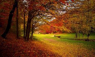 Faça um passeio sobre a bela Massachusetts no outono...