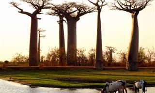 Turismo: 10 Atrações Imperdíveis de Madagáscar