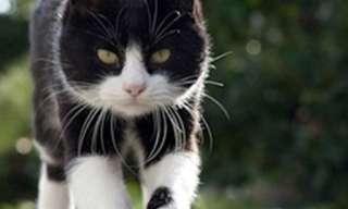 Outro Maravilhoso Dia de Gatos!