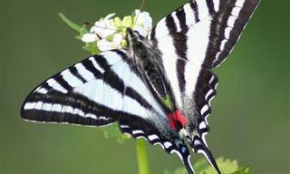 Branco e preto fica bonito em todos os animais