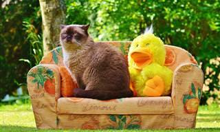 Para Alegrar o Seu Dia: O Melhor Vídeo de Gatos do Mundo!