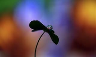 As pequenas coisas da natureza são as mais preciosas!