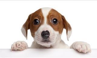 Assista: Uma Compilação Adorável de Cães Fofos