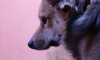Impressionante: Um Cãozinho Se Arrisca Para Salvar os Amigos!