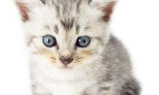 60 Fascinantes Fatos Sobre Gatos