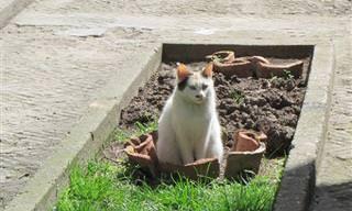 Adoráveis Fotos De Gatos Em Vasos De Plantas