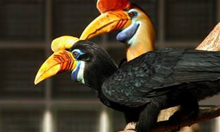 15 Belas e Exóticas Aves Raras