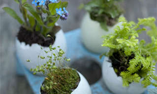 Ideias Para Lindos Jardinzinhos