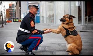 Emoção: Esses soldados veem seus cães depois de muito tempo