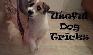 Jesse, o Cão Mais Prestativo do Mundo!