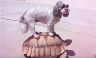 Confira as amizades mais inusitadas do mundo animal!