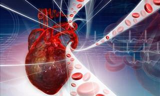 Entenda Mais Sobre a Má Circulação do Sangue no Corpo
