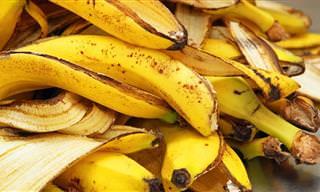 Você nunca mais jogará cascas de banana fora!