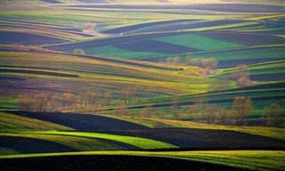 Os Belos e Coloridos Campos da Terra
