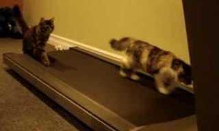 Programa de Boa-Forma Felina