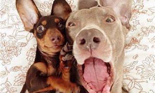 Amigos Verdadeiros Tornam Tudo Melhor!