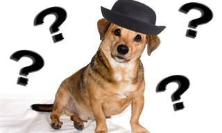 Você pode reconhecer o animal de uma foto incompleta?