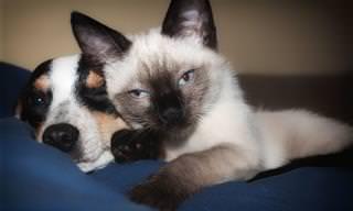 Você Tem Cérebro de Cão ou de Gato? Faça o Teste e Descubra!