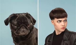 Tal dono, tal cão: quem mais se parece com quem?