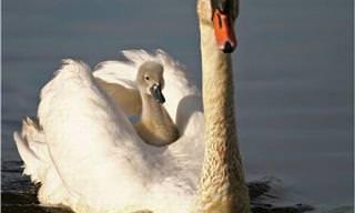 Um pouco de ternura para o seu dia: mamães e filhotes