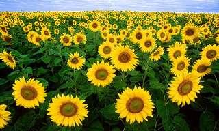 Belas Primaveras ao Redor do Mundo