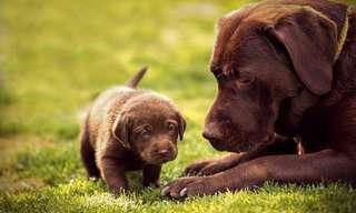 Estes Lindos Cães e Suas Cópias Fiéis...