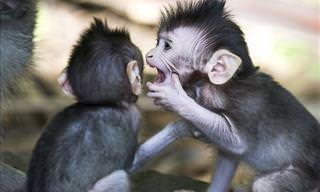 Você precisa ver este vídeo de macacos fofos e hilários!