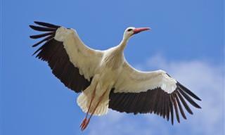Natureza: As 10 Aves Que Voam Mais Alto em Todo o Mundo