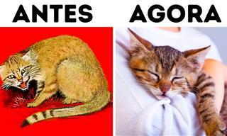 Como os gatos domesticaram os humanos