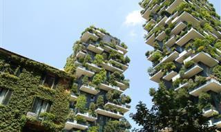 A versão moderna dos jardins suspensos