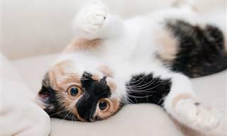 Gatos Pegos de Surpresa - Hilariante!