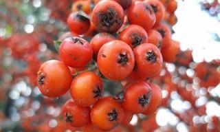 Dica: Plante seus tomates orgânicos em casa!