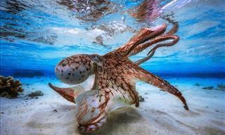 Os Ganhadores do Concurso de Fotografia Subaquática de 2017
