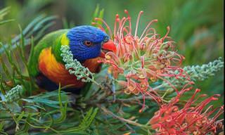 Admire a Beleza Natural da Terra em Fotos Premiadas