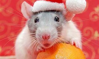 Esses Animais Já Estão Prontos Para o Natal!