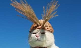 O Gato Mais Preguiçoso do Japão